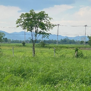 code KRB9771 Land for sale and beautiful garden,